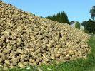 Aujourd'hui, on y voit des betteraves, hier, c'était des crânes | Photo : VS
